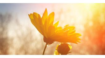 Voordelen van zon(licht) op huid en lichaam