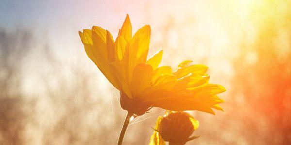 Voordelen van de zon